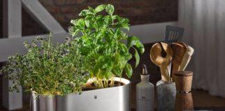 herbs-home-WMF